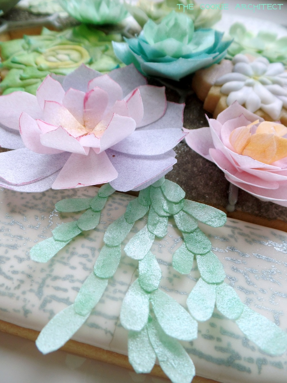 Succulent Detail one   The Cookie Architect