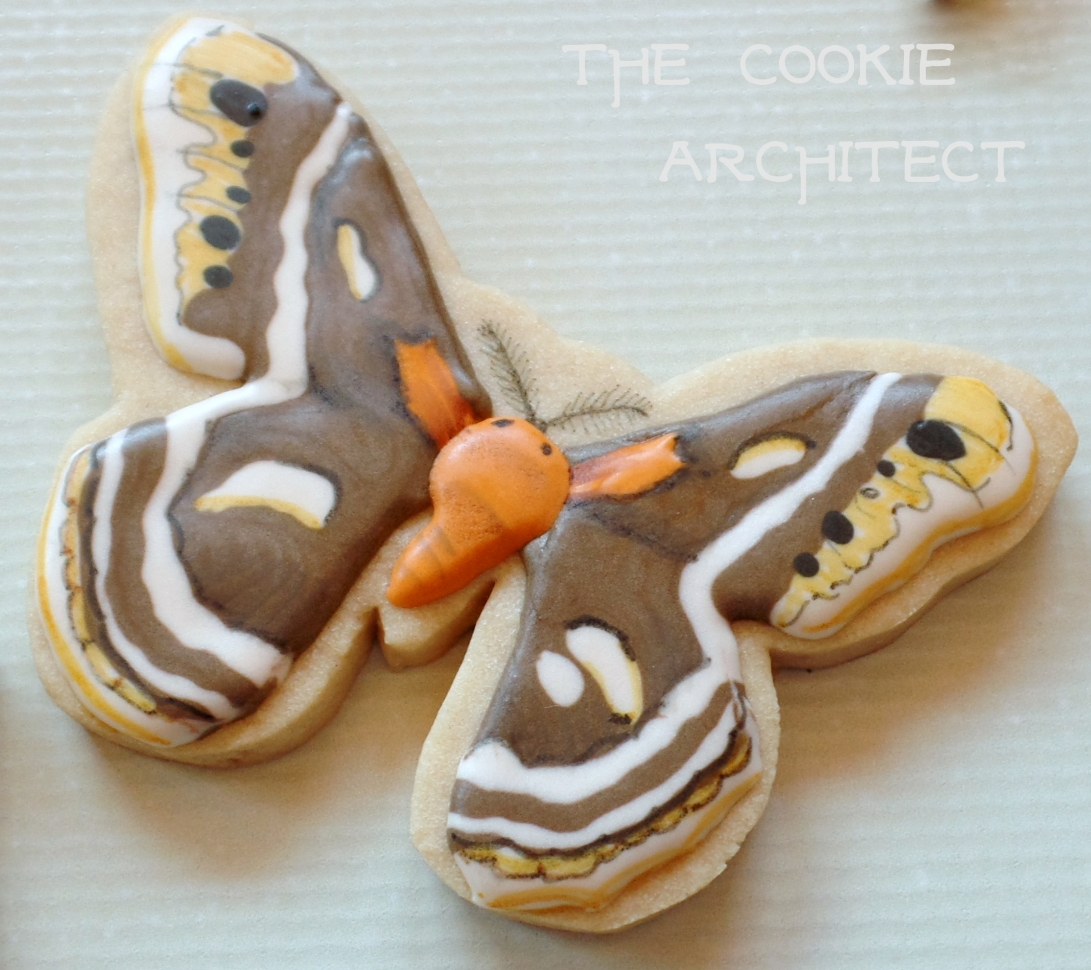 Moth | The Cookie Architect